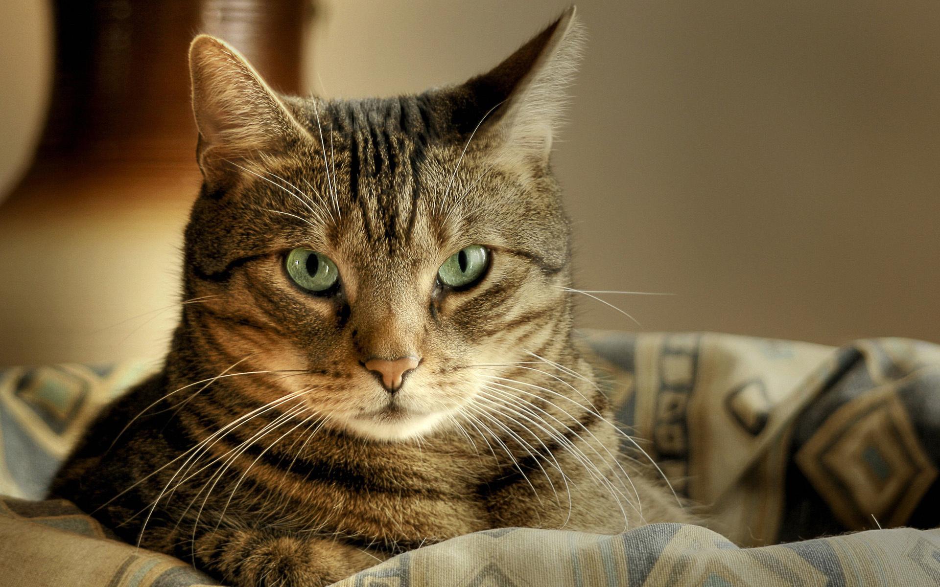 могу кошки подборка картинки быть менее заметной